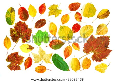 Large collection of different shaped and colored autumn leaves photographed on white background - stock photo
