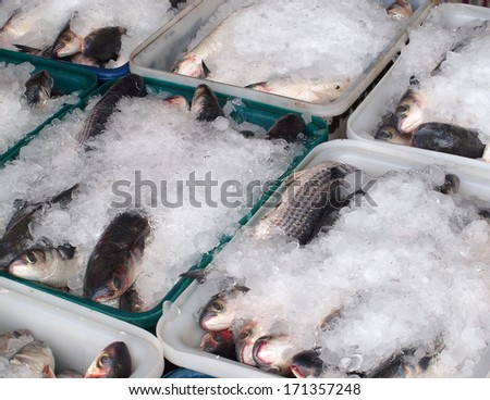 Large crates with grey mullet fish ready for transport  - stock photo