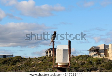 Large darter or snake bird of the anhigidae species sitting on a beacon at Port Bouvard groyne on a sunny afternoon in late winter. - stock photo