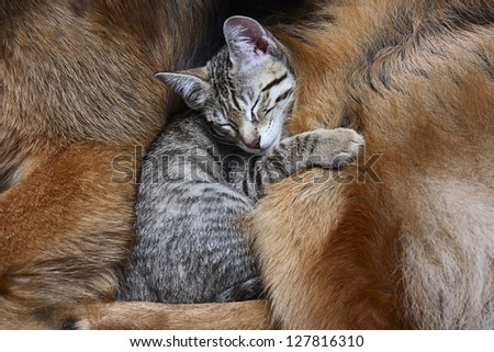 Large dog and a cat. - stock photo