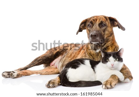 Large dog and cat lying together. isolated on white background - stock photo
