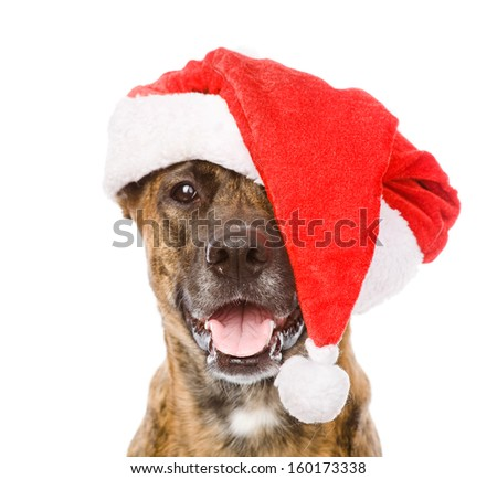 Large dog in red christmas Santa hat. isolated on white background - stock photo
