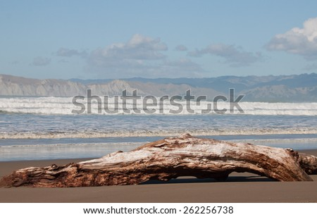 large driftwood log washed ashore on a New Zealand beach after a storm - stock photo