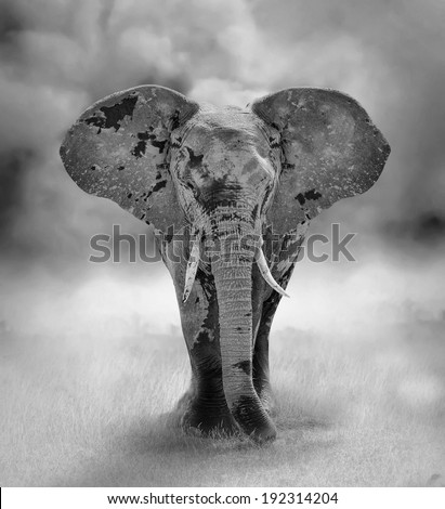 Large Elephant Bull Approaching (Artistic processing). Kenya, Africa - stock photo