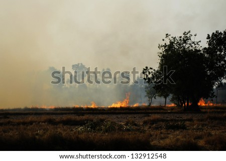 large field on fire - stock photo