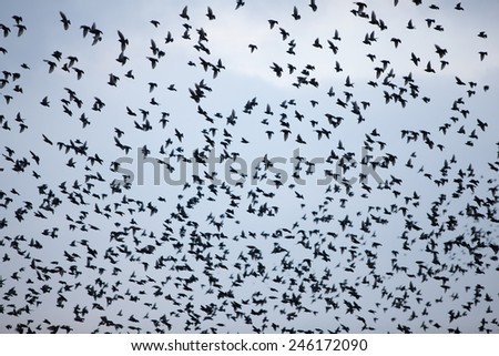 large flock of birds in the sky form an abstract pattern - stock photo
