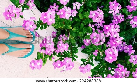 large flowering bush clematis and female bare feet with a pedicure - stock photo