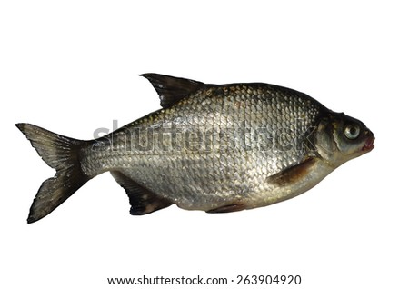 large fresh bream on white background - stock photo