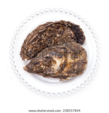 Large fresh oysters isolated on a white studio background.
