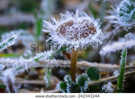 Large Frost Crystals on a Mushroom, Mt. Aspiring National Park, South Island of New Zealand - stock photo