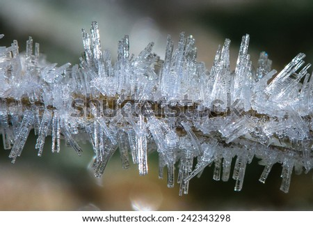 Large Frost Crystals on a Small Twig, Mt. Aspiring National Park, South Island of New Zealand - stock photo