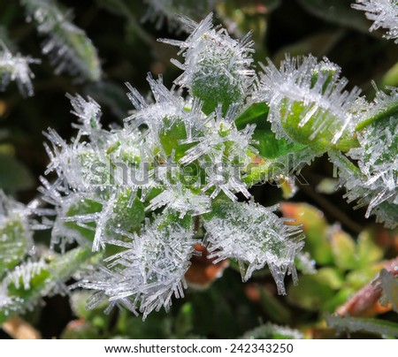 Large Frost Crystals on Grasses and Herbs, Mt. Aspiring National Park, South Island of New Zealand - stock photo