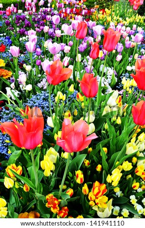 Large garden with variety of freshly grown flowers and greenery - stock photo
