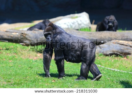 Large gorilla surrounded by the family on green lawn - stock photo