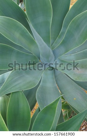 Large green cactus - stock photo