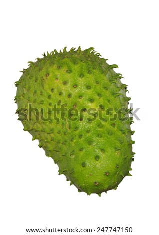 large green soursop fruit ready to eat - stock photo
