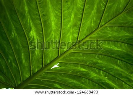 Large green tropical jungle leaf - stock photo