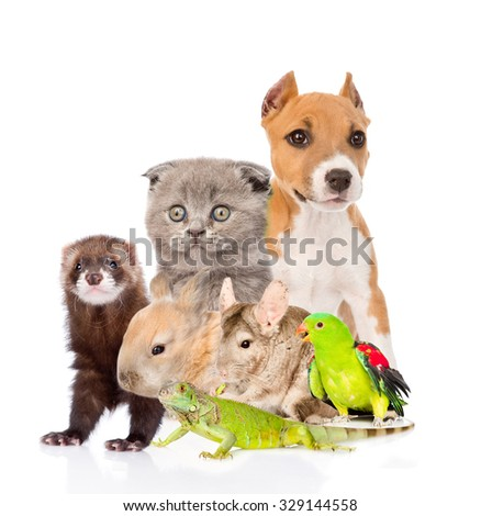 large group of animals. isolated on white background - stock photo