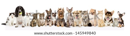 Large group of cats and dogs in front view. isolated on white background  - stock photo
