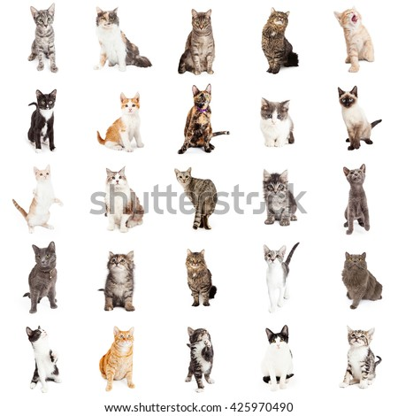 Large group of cats and kittens on square white background that can be made into repeating pattern