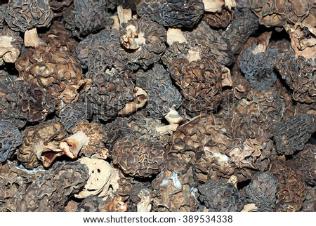 Large group of dried morel mushrooms - stock photo