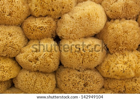 large group of natural sponges - stock photo