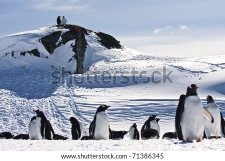 large group of penguins having fun in the snowy hills of the Antarctic - stock photo
