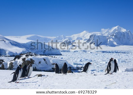 large group of penguins having fun on the snowy hills of  Antarctica - stock photo