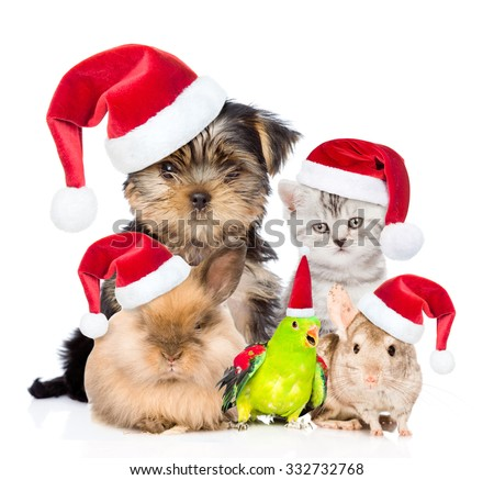 Large group of pets in red christmas hats. isolated on white background. - stock photo
