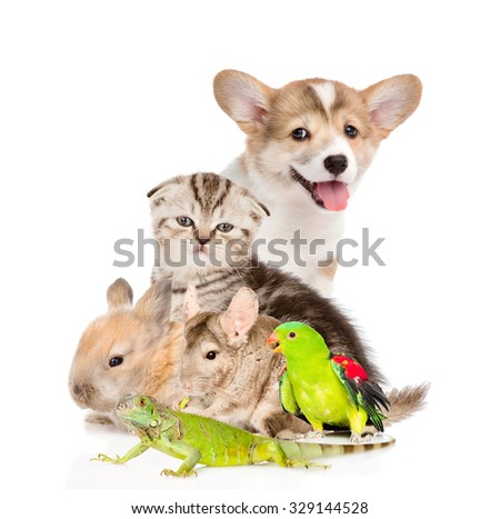 large group of pets. Isolated on white background - stock photo