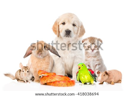 Large group of pets together in front view. Isolated on white background