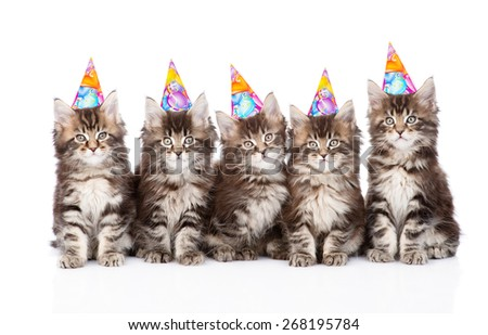 large group of small maine coon cats with birthday hats. isolate - stock photo