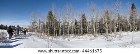 Large group of snowshoe hikers along broad snow ridge with conifers and aspen,  Vail Valley,  Colorado - stock photo