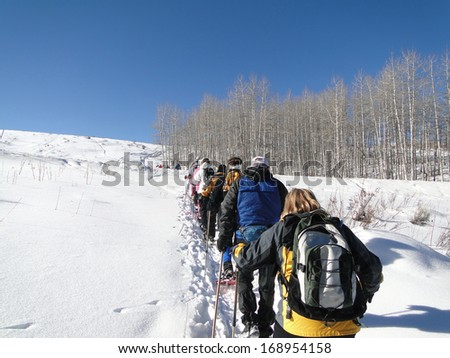 Large group of snowshoe hikers climbs a snow ridge with  bare winter aspen,  Vail Valley,  Colorado                   - stock photo
