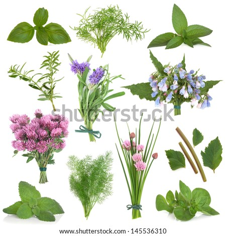 Large herb leaf and flower selection used for culinary and medicinal purposes over white background.