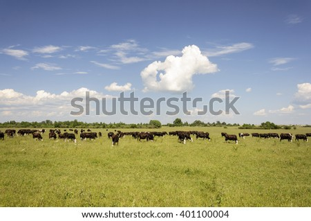 Large herd of cows grazing on the green meadow - stock photo
