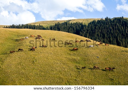 Large herd of grazing horses on the hill at sunset - stock photo
