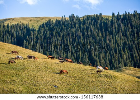 Large herd of horses grazing at sunset in mountains - stock photo