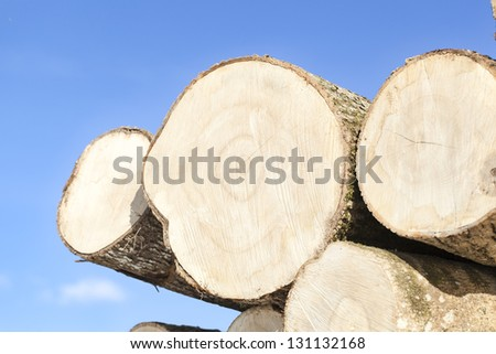 Large logs stacked on a blue sky background - stock photo