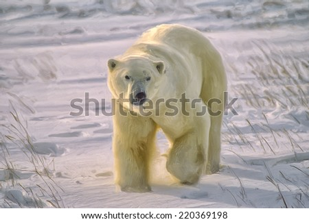 Large male polar bear walking on Arctic tundra - stock photo