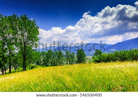 large meadow with mountain herbs and a few deciduous trees and shrubs in the foreground. clouds over the mountainous massif away in the background. good weather on a nice summer day - stock photo