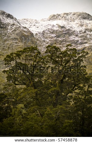 Large mountain walls with ancient trees