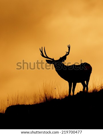 Large Mule Deer Buck stag on ridge top skyline silhouette sunrise / sunset photo with space for text / copy Deer & big game hunting season in the western United States