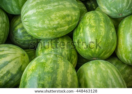 Large organic summer watermelon on display at local farmers market