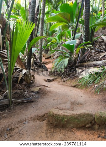 large palm trees and a dirt track in a tropical park in Seychelles - stock photo