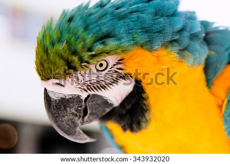 Large parrot stares one eye on the photographer - stock photo