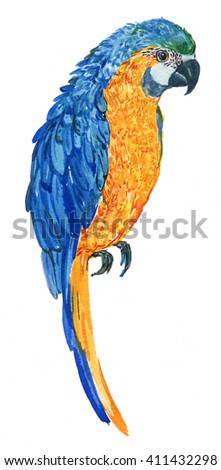 large parrot. tropical bird.green-blue parrot on a white background. watercolor illustration - stock photo