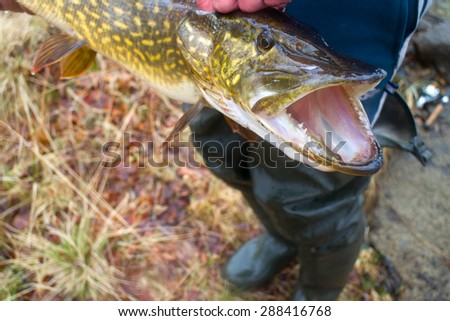 large pike inaccessible rivers and lakes - stock photo