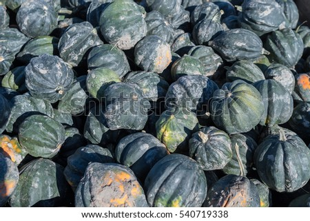 Large pile of  specialty blue squash that looks like a pumpkin filling the entire frame