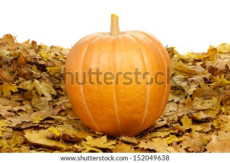 Large pumpkin surrounded by leaves on a white background - stock photo